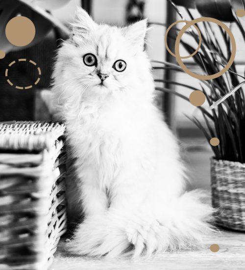 macskamentaklub_macska_cica_cat
